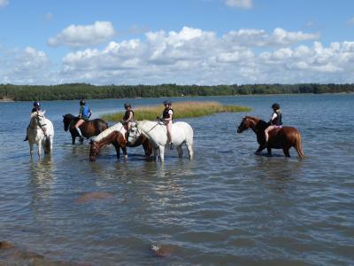 Hästarna måste också bada